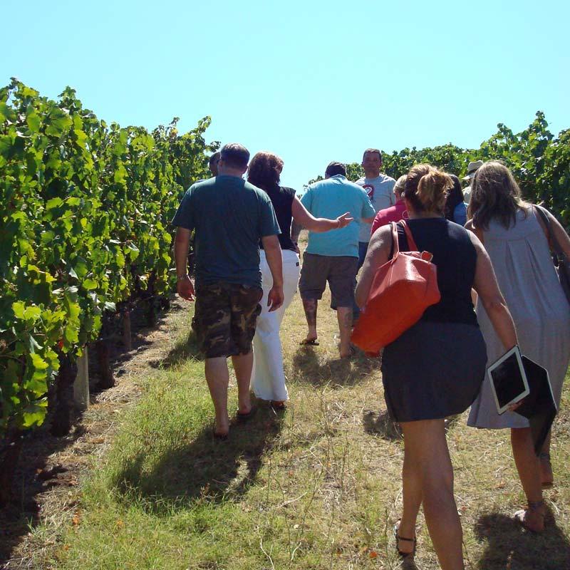 Greek Wine Tours